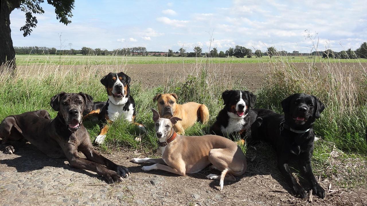 Herzlich Willkommen in der Villa Hundebunt